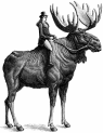 Archer Roose