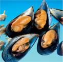 Molluscs/Mollusques