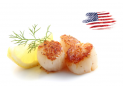 Scallops USA wild caught MSC
