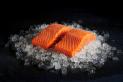 Coho Salmon ASC