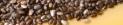 Oily Seeds