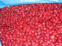 IQF and Frozen Cranberries, Organic and Conventional