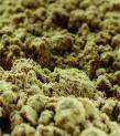 Bulk Organic Hemp Protein Powder Canah
