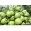 Coconut water - bulk