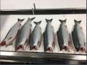 Alaskan wilde salmon taw product
